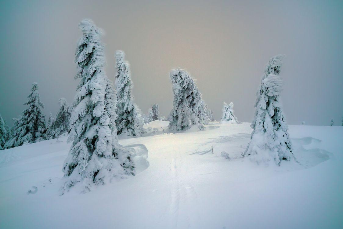 Фото бесплатно зима, белоснежный пейзаж, снег, сугробы, деревья, закат, природа, пейзажи