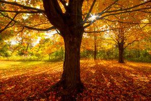 Фото бесплатно осень, парк, лес