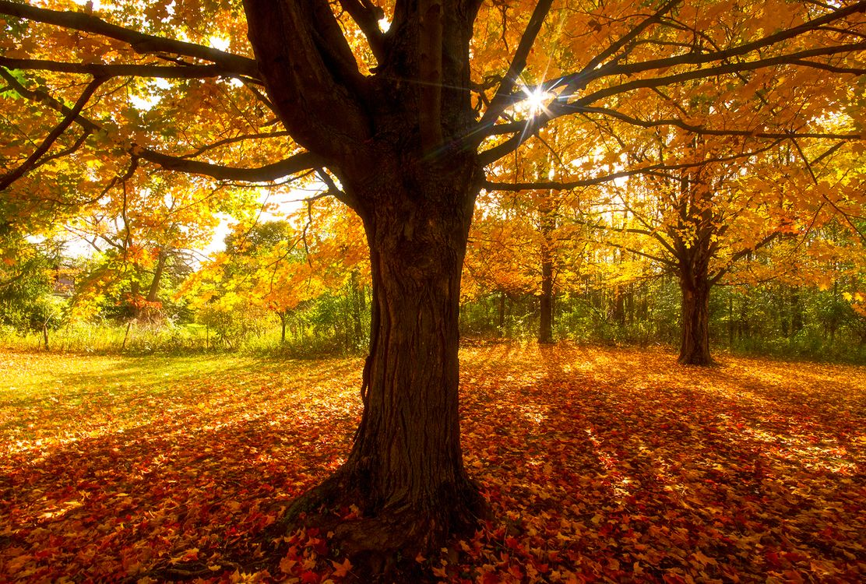 Обои осень, парк, лес картинки на телефон