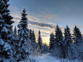 Фото бесплатно зима, закат, снег, деревья, ели, природа, пейзаж