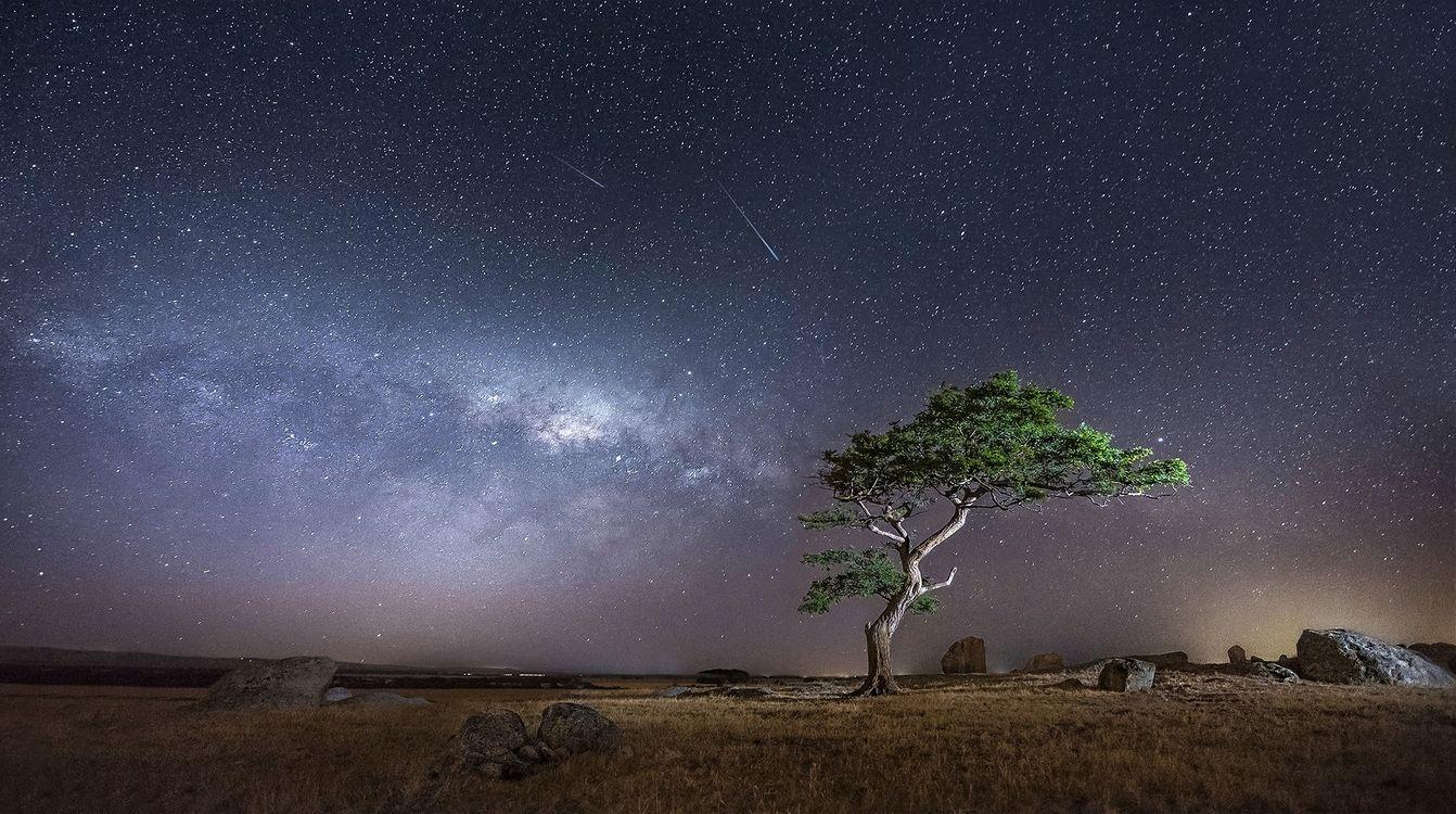 Фото бесплатно Австралия, Виктория, одинокое дерево - на рабочий стол