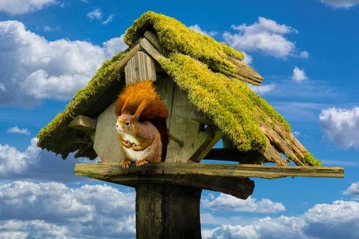 Photo free protein, aviary, animals