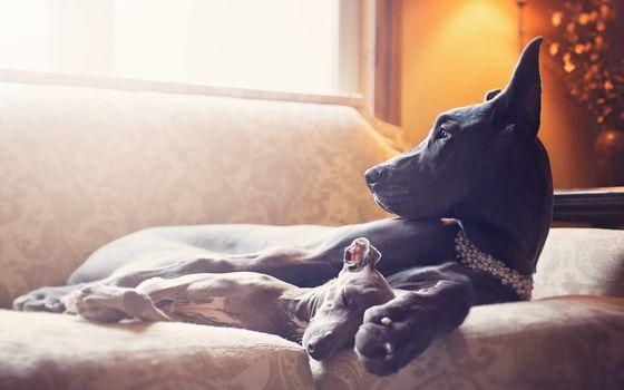 Photo free dog, black dog, laying