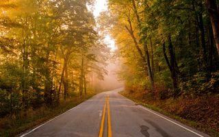 Фото бесплатно осень, лес, дороги, деревья