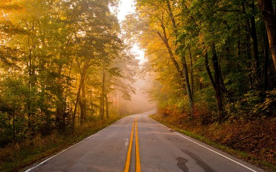 Photo free autumn, roads, forest