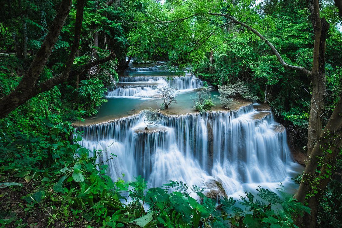 Дикая природа · бесплатное фото