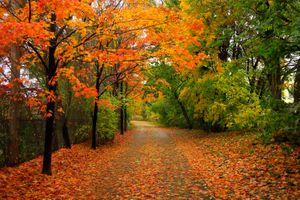 Бесплатные фото осень,парк,лес,дорога,деревья,природа,пейзаж