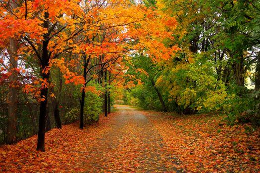 Бесплатные фото осень,парк,лес,дорога,деревья,природа,пейзаж,осенние краски,краски осени