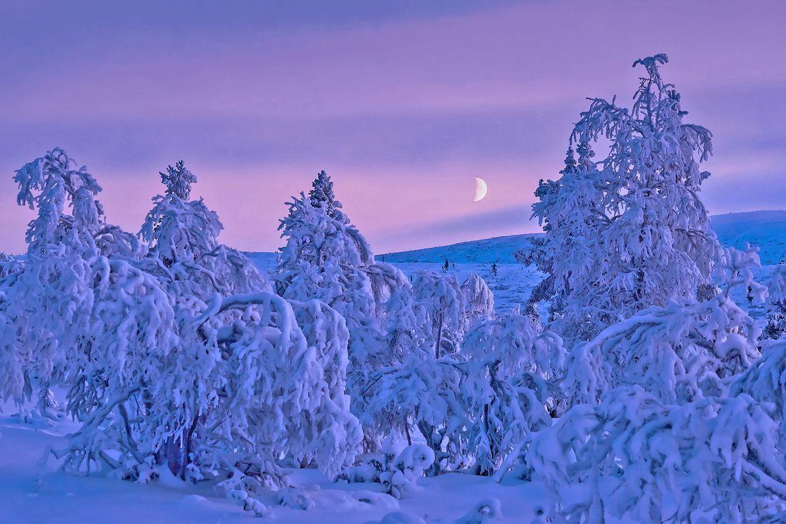 Фото бесплатно зима, снег, ночь, месяц, деревья, сугробы, природа, пейзаж, пейзажи