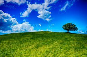 Фото бесплатно одинокое дерево, поле, холм, трава, газон, дерево, небо, облака, природа, пейзаж