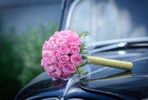 Фото бесплатно роза, цветочная композиция, мох