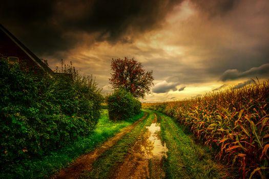 Фото бесплатно кукуруза, закат, небо