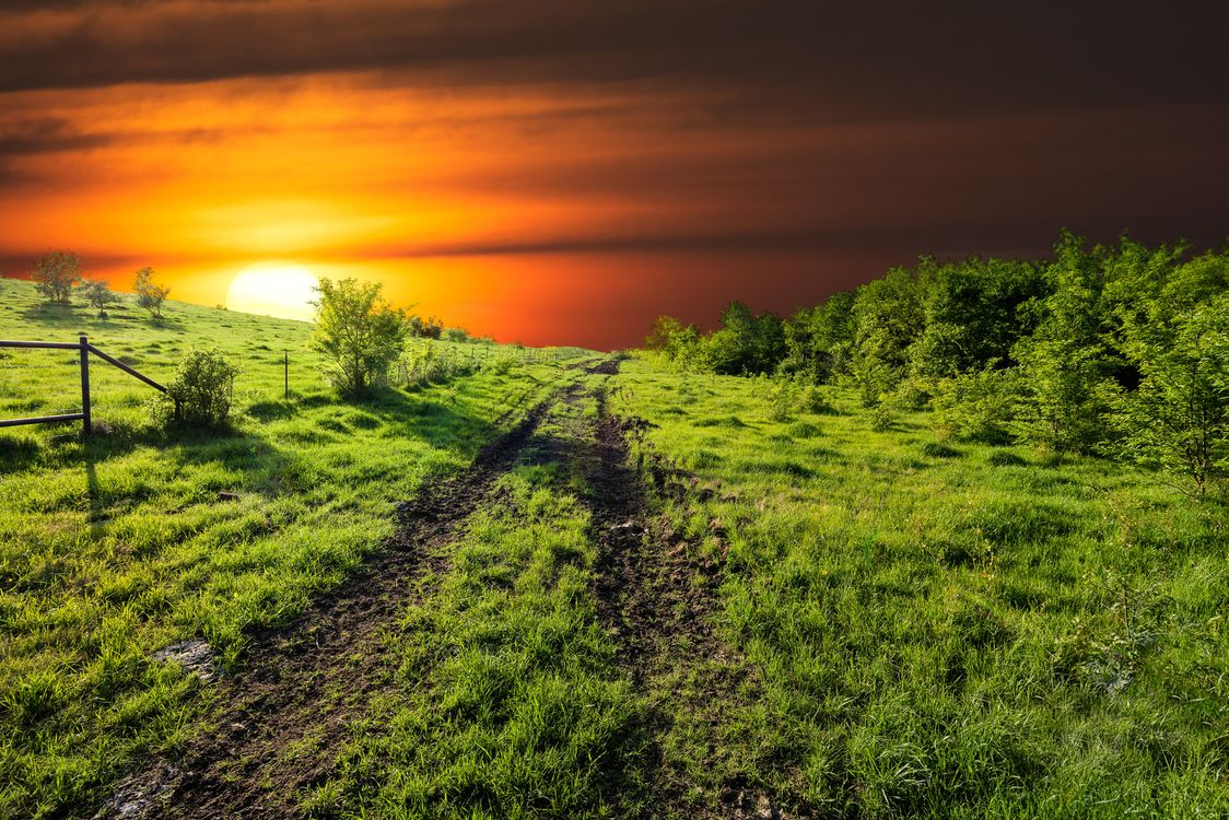 Фото бесплатно закат, поле, дорога, деревья, трава, небо, природа - на рабочий стол