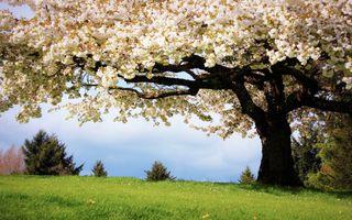 Фото бесплатно цветы, трава, пейзажи