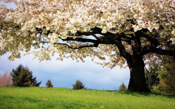 Заставки цветы, трава, пейзажи