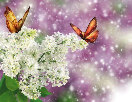 Photo free butterflies, flora, lilac