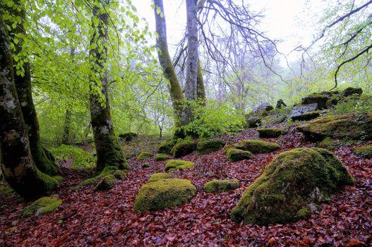 Фото бесплатно мох, валуны, осень