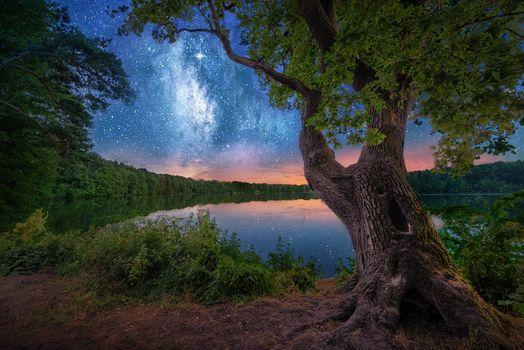 Бесплатные фото озеро,дерево,деревья,берег,небо,сияние,природа,пейзаж
