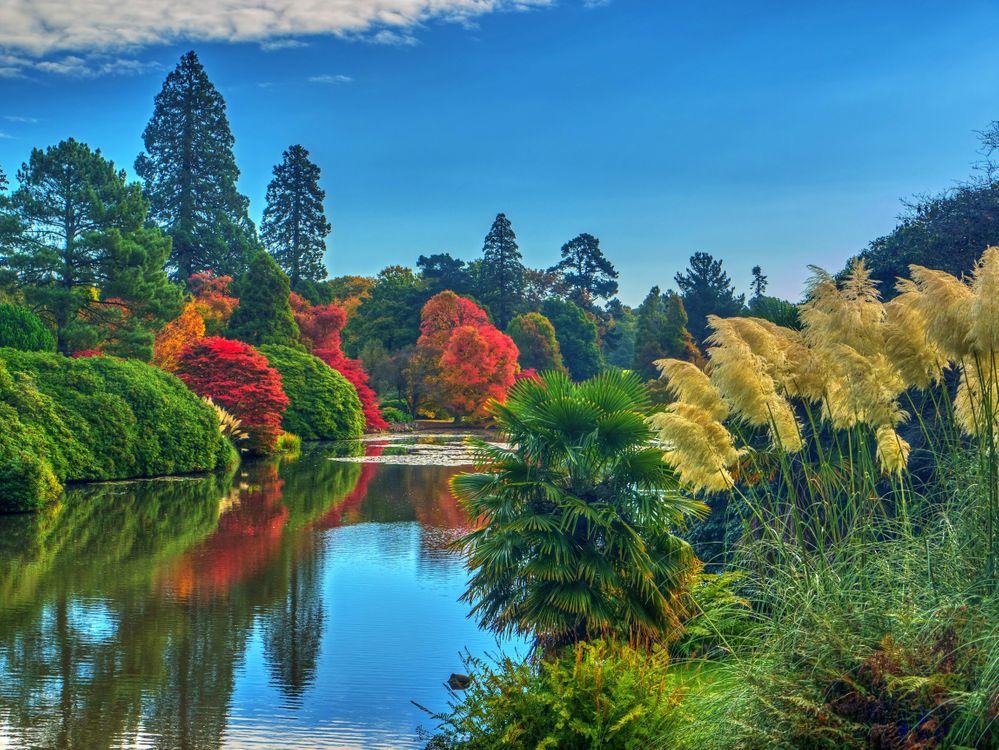 Обои Шеффилд Парк, Sheffield Park, Англия, Великобритания, пруд, парк, водоём картинки на телефон