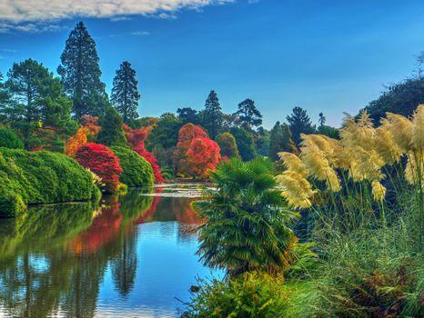 Фото бесплатно осень, парк, Англия