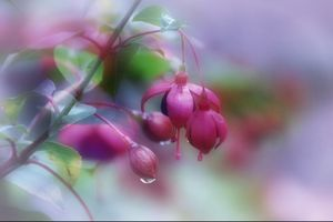 Фото бесплатно растения, цветок, флора