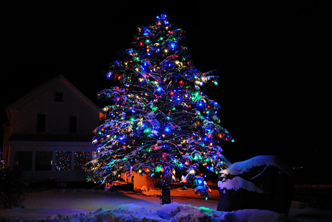 Фото бесплатно новогодняя ёлка, ночь, гирлянды - на рабочий стол