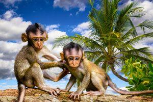 Бесплатные фото обезьяны,приматы,мартышки,пальма,животные,art