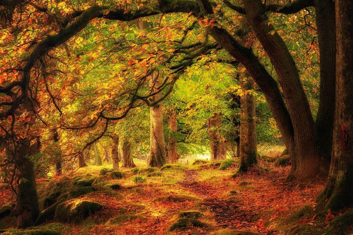 Фото бесплатно осень, лес, парк, деревья, природа, осенние краски, краски осени, осенние листья, пейзаж, пейзажи