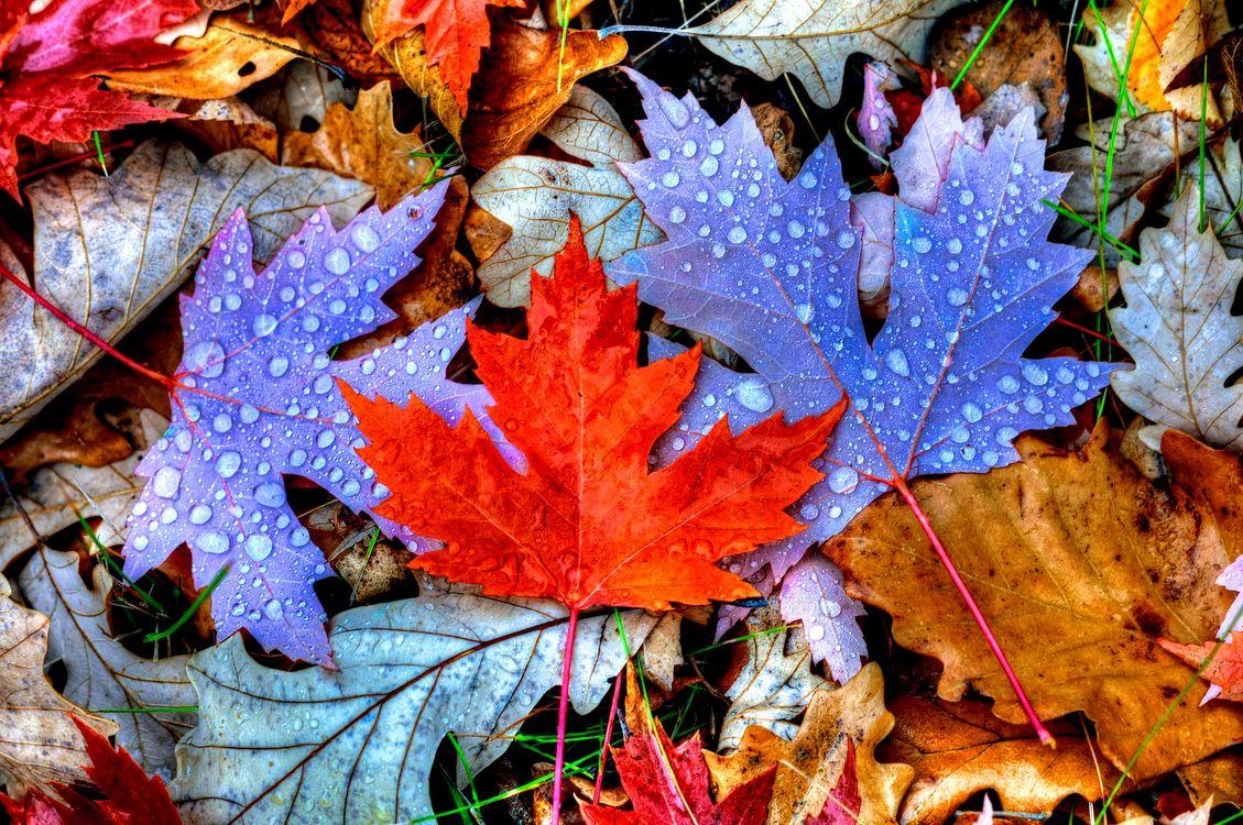 Фото бесплатно осень, листья, осенняя листва, осенние листья, осенние краски, краски осени, капли, природа, природа