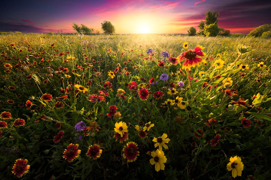 Фото бесплатно цветочное поле, цветение, поле - на рабочий стол