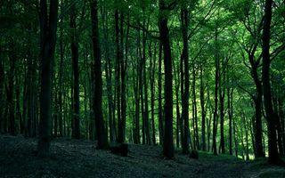 Фото бесплатно лесостепные, лето, степь