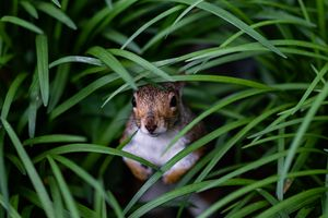 Фото бесплатно белка, трава, грызун