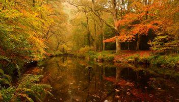 Бесплатные фото лес,деревья,река,осень,природа,пейзаж