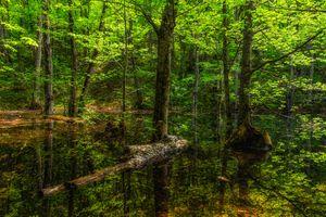 Бесплатные фото лес,деревья,водоём,природа