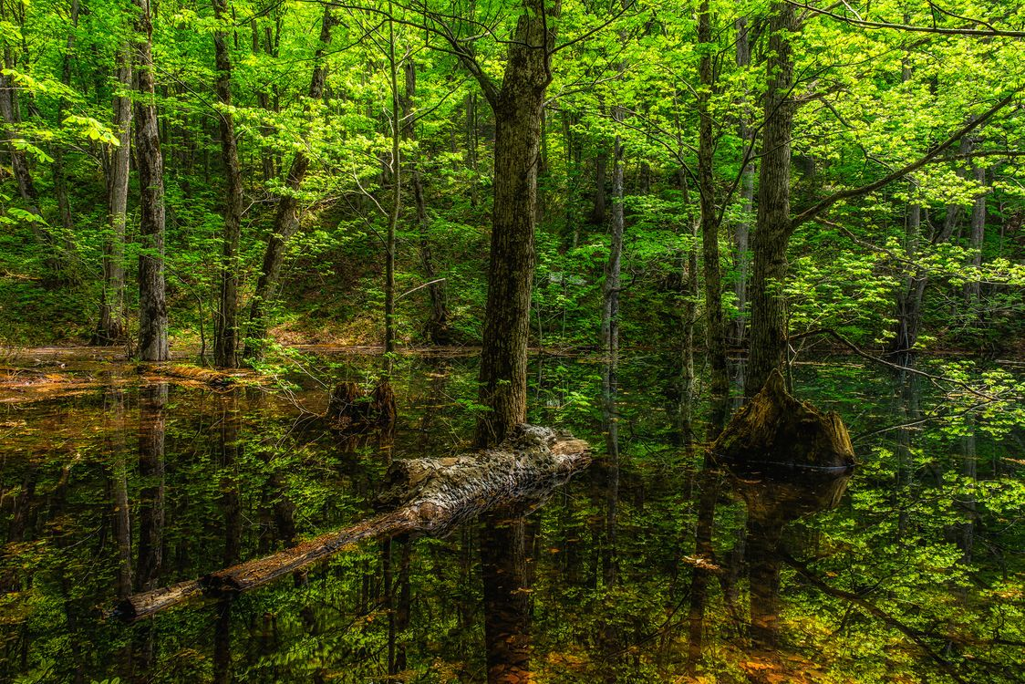 Free photo forest, pond, nature - to desktop