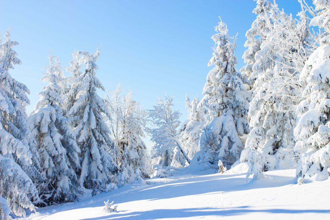 Фото бесплатно лес, деревья, зима, снег, пейзажи