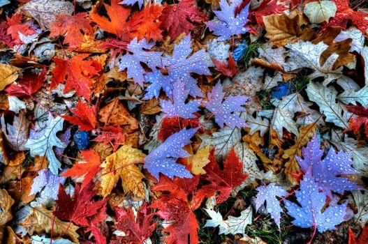 Заставки осень,листья,осенняя листва,осенние листья,осенние краски,краски осени,капли,природа