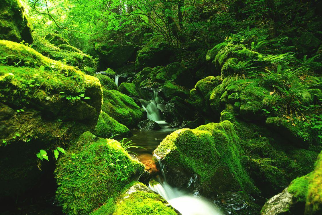 Фото бесплатно зелёный, лес, камни - на рабочий стол