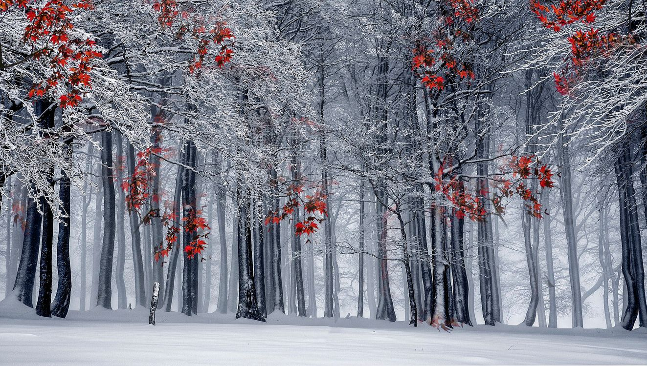 зимняя осень · бесплатная заставка