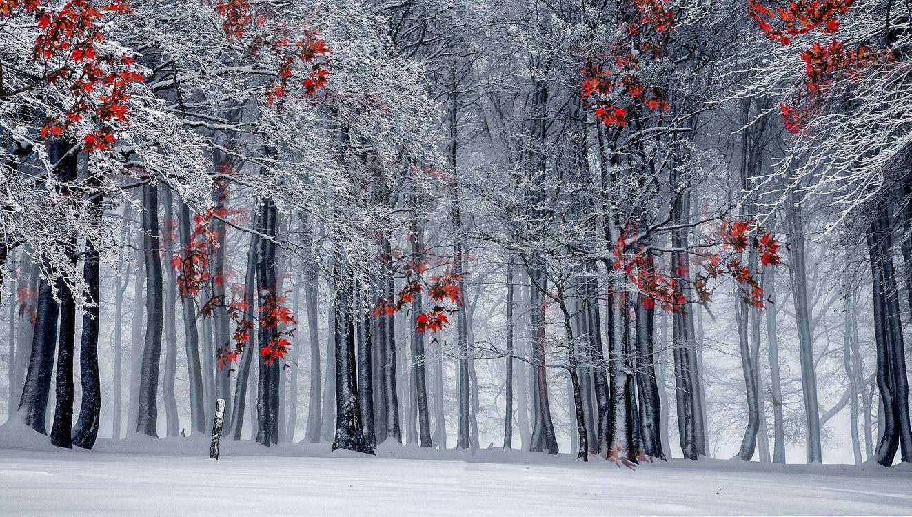 зимняя осень · бесплатное фото