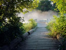 Фото бесплатно туман, мостик, ветви деревьев