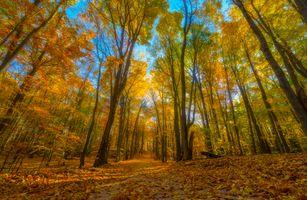 Заставки осень, лес, парк, деревья, осенние листья, краски осени, дорога, осенние краски, пейзаж