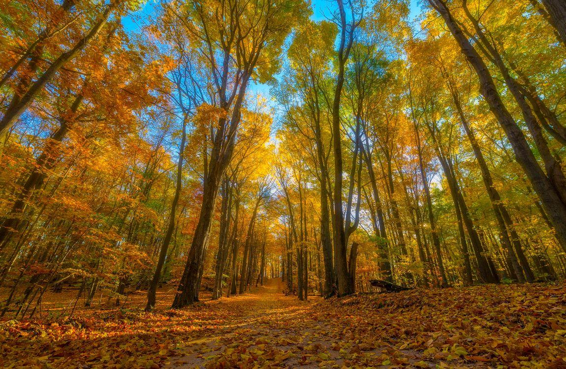 Фото бесплатно осень, лес, парк, деревья, осенние листья, краски осени, дорога, осенние краски, пейзаж, пейзажи