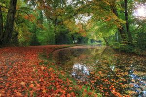 Photo free forest, autumn colors, landscape