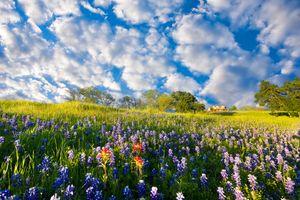 Заставки цветы, цветение, цветочное поле