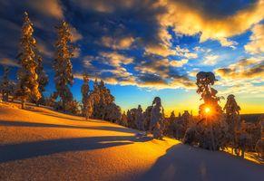 Фото бесплатно холм, небо, деревья