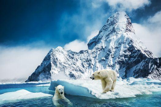 Бесплатные фото Белый медведь,полярный,северный медведь,море,льдина,медведи,фотошоп,фантазия,art