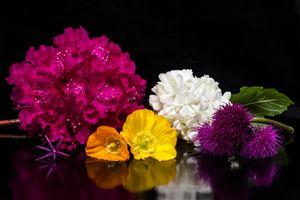 Заставки флора, цветы, цветочные композиции