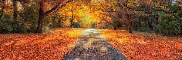 Фото бесплатно Парк, панорама, цвета осени