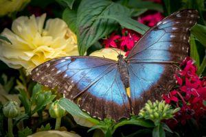 Заставки бабочка, цветы, цветок
